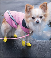 yellow chihuahua booties