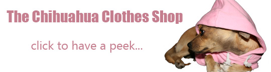 browse the chihuahua clothing store