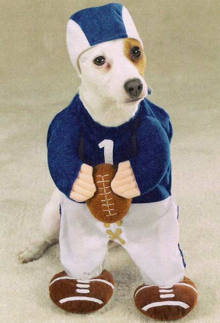 costumes-for-dogs-football-star-qb.jpg