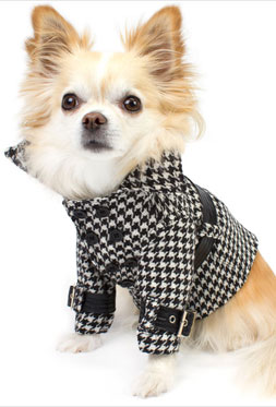 Designer dog coats and a stroll through new york city - Dog clothes for chihuahuas ...