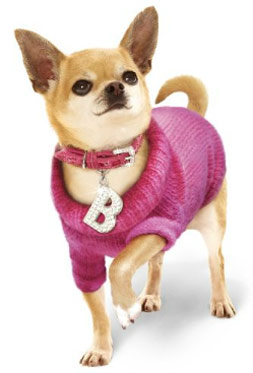 Cute dogs wanted to model for clothing company  Hull Live