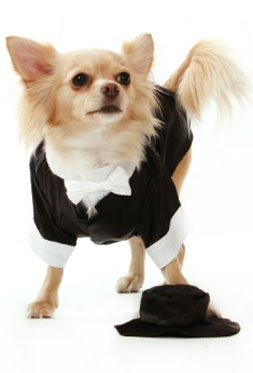 Chihuahua Dog Clothes