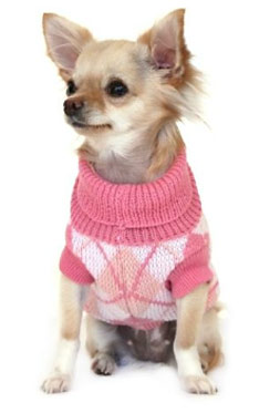 Dog Sweaters for Small Dogs: A Comparison of The Different Kinds
