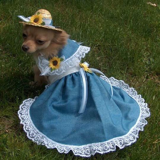 b4192441e Chihuahua Dresses - Chihuahua Clothes