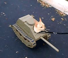 chihuahua dressed up as a tank for Halloween